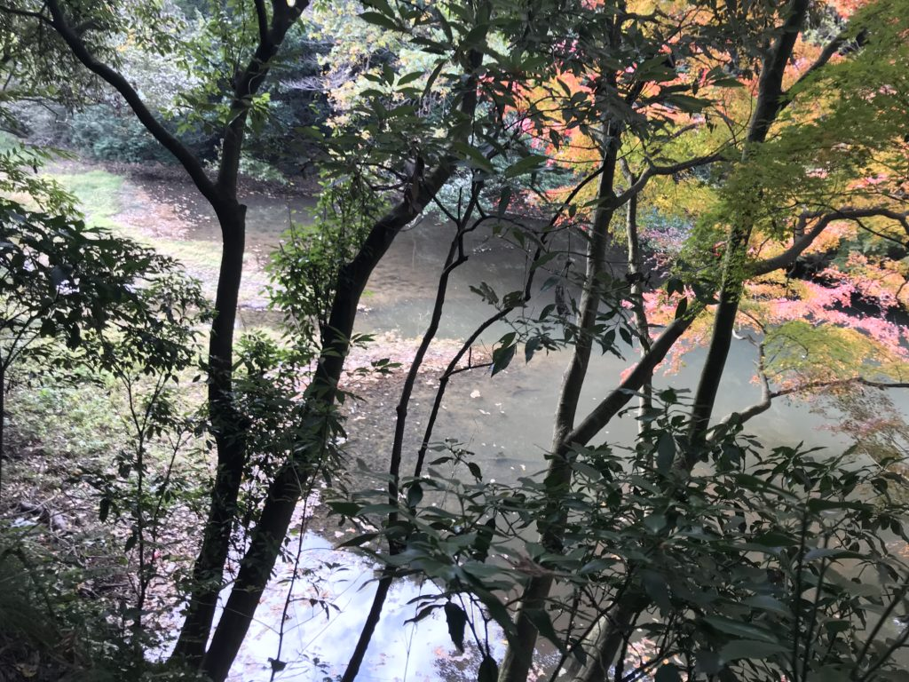 瀬上の池。