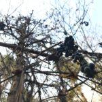 森と山ぶどうワイン!安孫自然塾~岩手くずまきワインへ。キャンピングカーで森の旅499日目。
