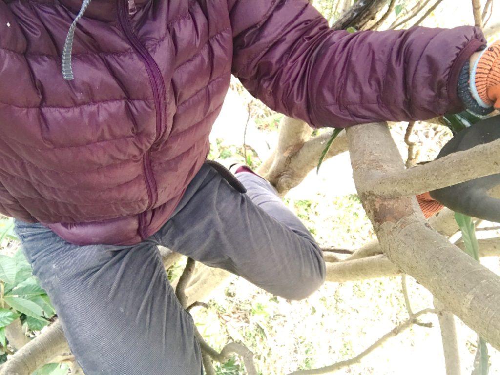 木に登る。