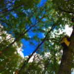 【大分】残席1組!4/1(日)探検!寝転ぶ!楽器を鳴らす!森の歌ピクニック@つみきの森MUGA