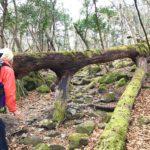 【大分】4/12(木)特別な森に行こう。あなただけのプレゼントソングを作る、癒しの歌トレッキング@由布市ソババッケ