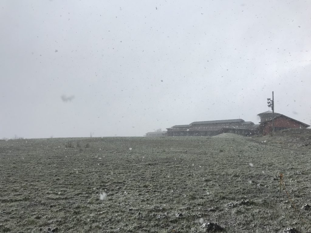 久住高原の吹雪。